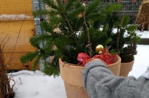 Dieses Jahr ist alles anders: Outdoor-Weihnachten